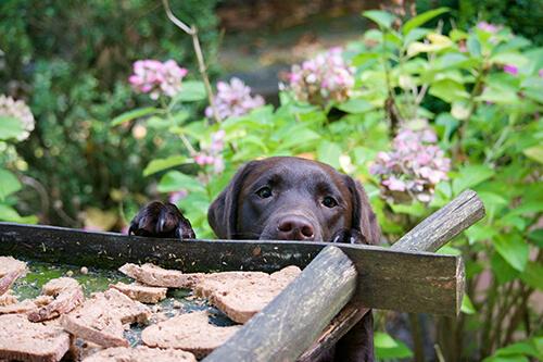 hondengedrag en activiteiten met je hond